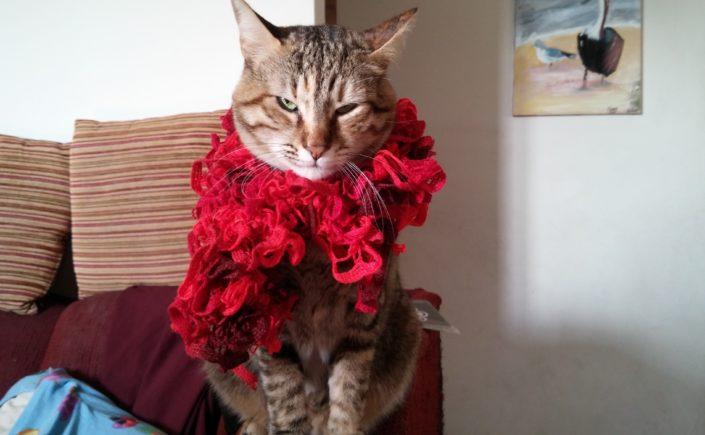 משי החתולה שלי